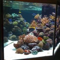 Aquariums-(1).jpg
