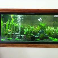 Aquariums-(10).jpg