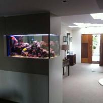 Aquariums-(13).jpg