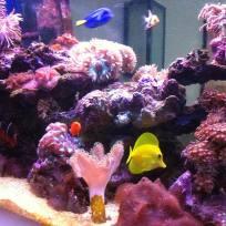 Aquariums-(14).jpg