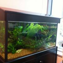 Aquariums-(15).jpg