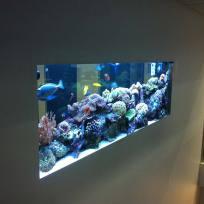 Aquariums-(23).jpg
