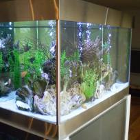 Aquariums-(29).jpg