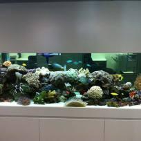Aquariums-(30).jpg