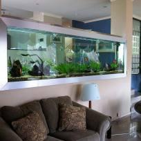 Aquariums-(31).jpg