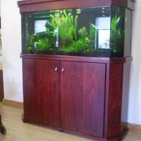 Aquariums-(35).jpg