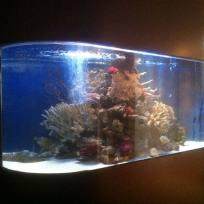 Aquariums-(4).jpg