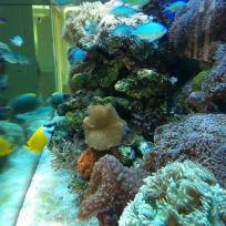Aquariums-(42).jpg