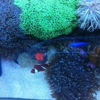 Aquariums-(43).jpg