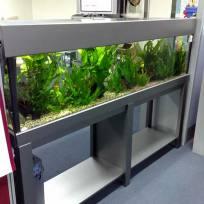 Aquariums-(7).jpg