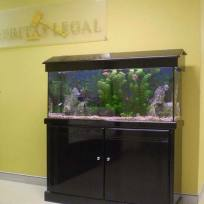 Aquariums-(8).jpg