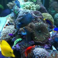 Aquariums-(9).jpg