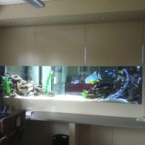 Aquariums-(12).jpg