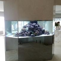 Aquariums-(2).jpg