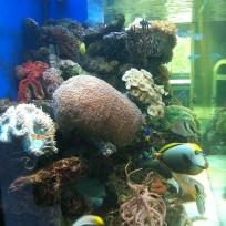 Aquariums-(34).jpg