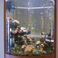Aquariums-(36).jpg