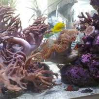 Aquariums-(38).jpg