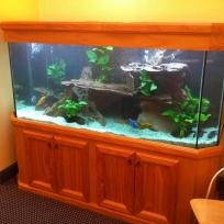 Aquariums-(41).jpg