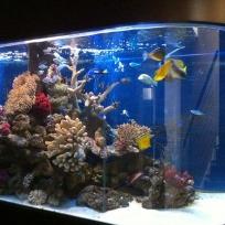 Aquariums-(5).jpg