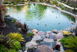 Pond problem solving and reliable maintenance services.