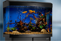 Design your own rental aquarium for your office