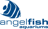 Angelfish Aquariums