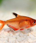 Community-Fish