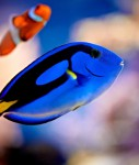 Saltwater-Fish