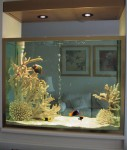 Saltwater Aquariums
